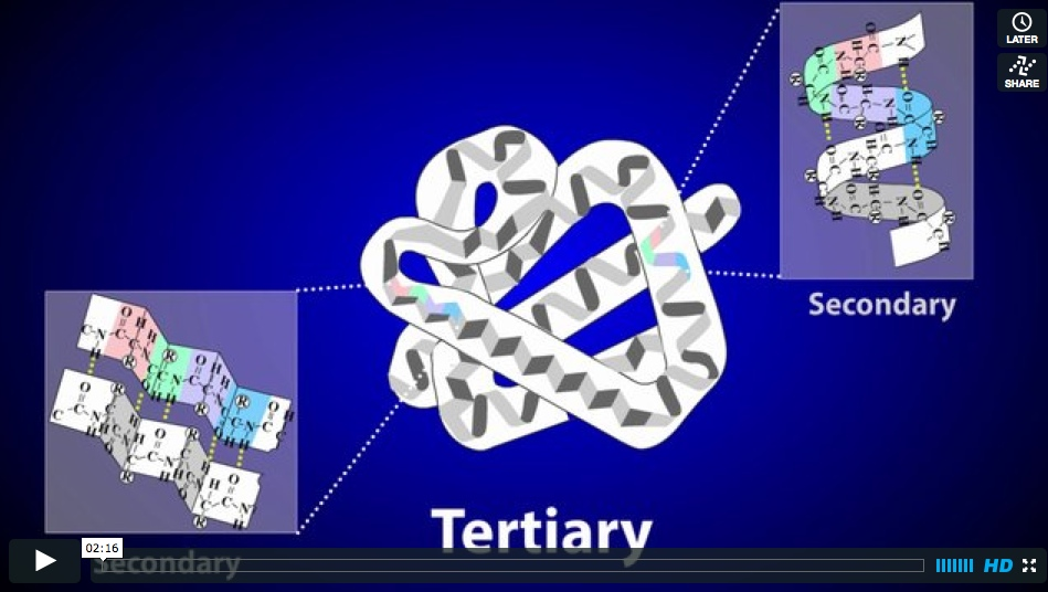 Videos: Introduction to Chemistry and Protein Structure