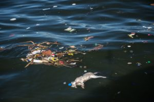Guanabara Bay: Dead Cat with Debris