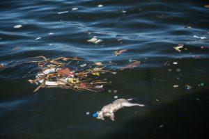 Guanabara Bay: Dead Cat with Debris