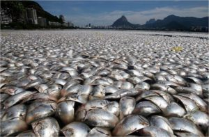 Guanabara Bay Fish Kill