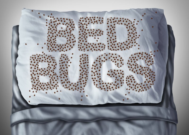 Bed Bug Treatment in Desert Hills, Anthem, Cave Creek, Glendale AZ