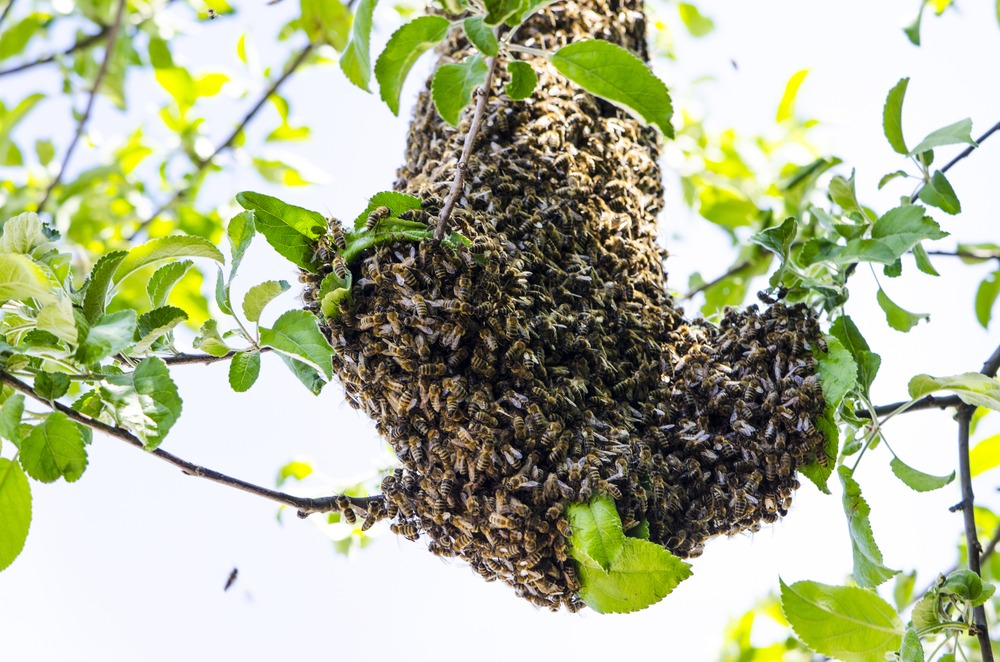 Bee Control Bee Removal in Desert Hills, Anthem, Cave Creek and Glendale AZ