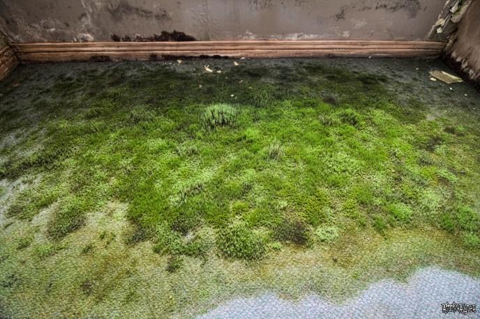Green carpet in abandoned resort