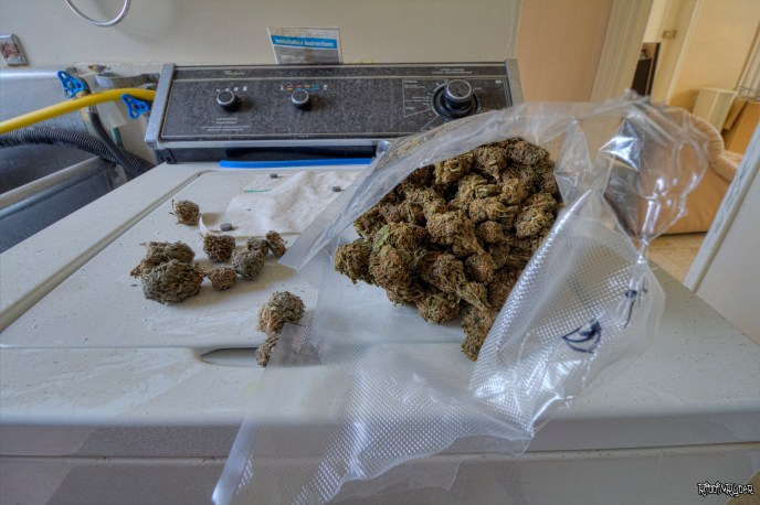 A Pound if weed found inside an abandoned biker grow op