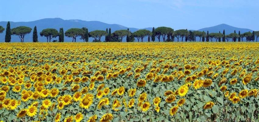 Tuscany – A villa in…