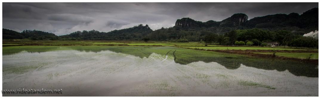 Zwischen den Bergen, jede Menge Reisfelder. Klingt allein dedshalb absurd, weil nur etwa 600 KM nördlich die schlimmste brasilianische Dürre tobt. Sao Paulo hat noch Wasservorräte bis März 2015, 6 Monate etwa. Was dann passiert ist ungeklärt. Wir können die Wasserknappheit hier nicht sehen, alles ist super nass und es regnet eigentlich täglich.