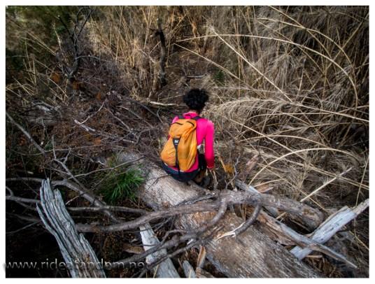 Wir müssen klettern, krabbeln und immer sehr vorsichtg sein. Eine Verletzung können wir jetzt nicht gebrauchen.