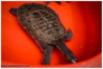 und Schildkröten. Die lassen wir allerdings beim Probieren aus.