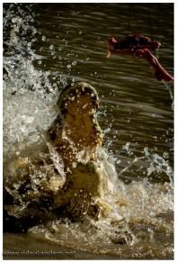 """Der Hinweis keinen Arm, Kopf oder gar Oberkörper über die Bootskante zu """"hängen"""" kann man sich nach dem ersten Krokodil sparen. Keiner macht es mehr freiwillig."""