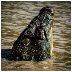Bis zum Schluss habe ich nicht verstanden, warum unser Boot Schwimmwesten hatte. Der Fluss ist nicht breit, die Anzahl der Krokodile hoch, mir würde die Ruhe fehlen dieses Ding anzulegen. Scheinbar hat auch Australien so eine Art EU