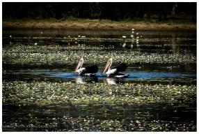 Wasser ist im Kakadu National Park allgegenwärtig, baden tun fast nur Krokodile.