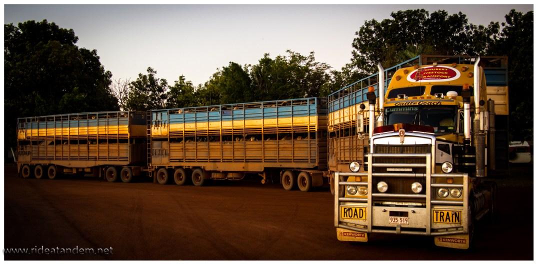 Road Trains, 3 Anhänger manchmal sogar 3,5. Dicker Bullenfänger vorne dran, dann stören nachts die Kühe und Kangäruhs nicht so sehr auf der Strasse und können einfach überfahren werden. Wir sehen dann tagsüber die Ausbeute der Nacht.