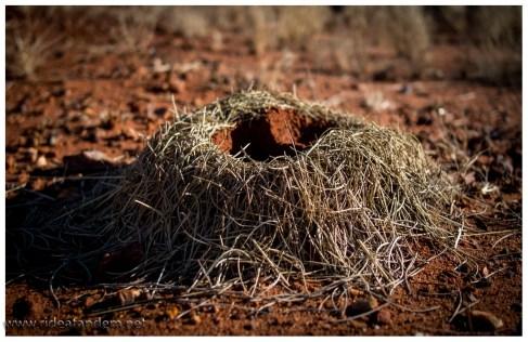 Ameisen bauen hier irre Nester. Hier das Modell 'Frankfurter Kranz'.