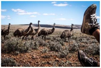 Was auch immer die Emus antreibt???