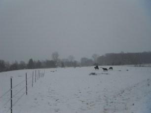 Jan 31, 2012 026
