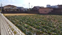 Urban farming during my meandering in Osaka.