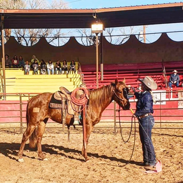 how to choose a horse trainer, art of the cowgirl, colt starting, horse training, horsemanship