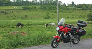 New York Horses---29