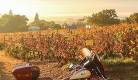 The 2015 Indian Roadmaster basks at sunrise amid the vineyards of the Grande Roche Hotel, Paarl.