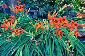 far florals