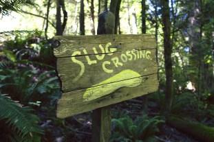 hella slugs