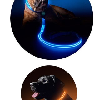 LED Dog Collars and Leashes