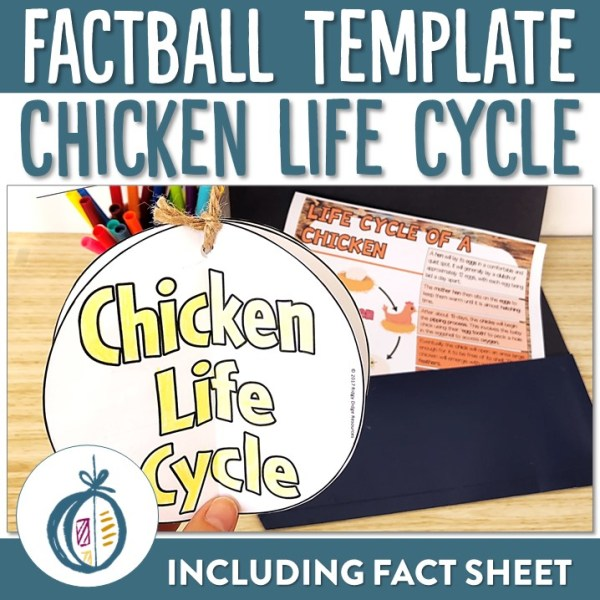 Chicken Life Cycle Factball | Ridgy Didge Resources | Australia