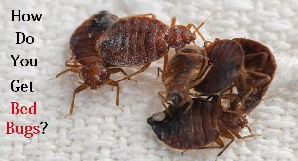 Bed Get Bugs Do How You