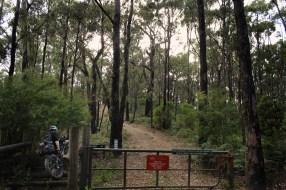 Entering Candlebark Track