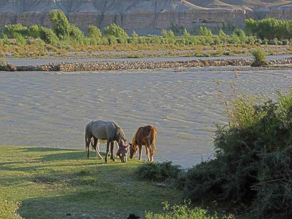 Ponies-indus-riverside