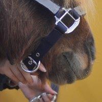 Att möta hästen i boxen - steg för steg