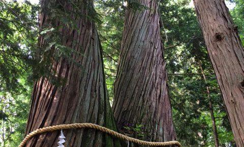 青木山荘に来てね! 9月23日(土)私の開花宣言〜木を育てましょう〜1day open class