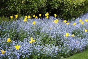 ロンドンの花壇、ご紹介