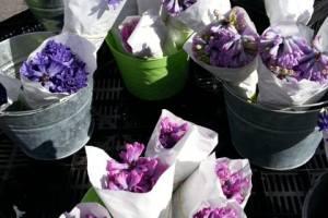 元気な花を咲かせましょう!小さな種とつぼみたちへの栄養*
