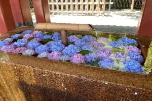 初夏の鎌倉にご案内