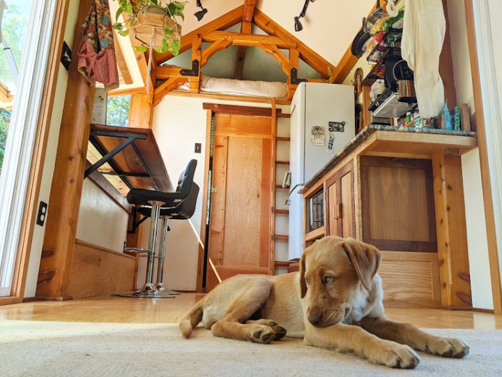 puppy in a living room in a tiny house