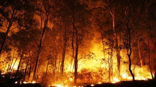 إسبانيا: حرائق الغابات تأتي على أزيد 2500 هكتار من الغابات والأحراش خلال يومين بجهة غاليسيا