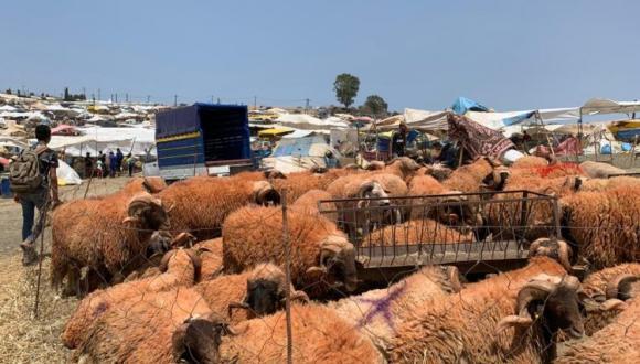 خبراء يكشفون وضعية القطيع بالمغرب وهذه أهم النصائح لتجنب فساد لحومها خلال العيد