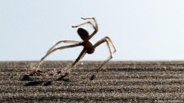 """عالم ألماني يكتشف عناكب مغربية """"فريدة من نوعها"""""""