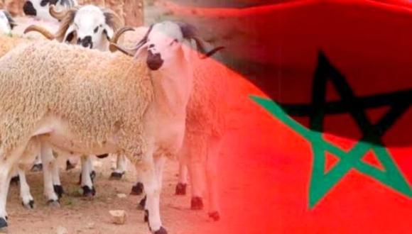 رسميا: هذا موعد عيد الأضحى بالمغرب