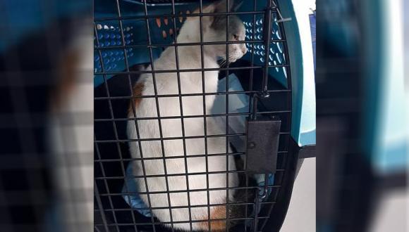 القبض على قط يهرب المخدرات إلى داخل أحد السجون