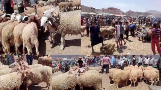 عيد الأضحى.. العرض من القطيع يتجاوز الطلب بأكثر من 40 في المائة