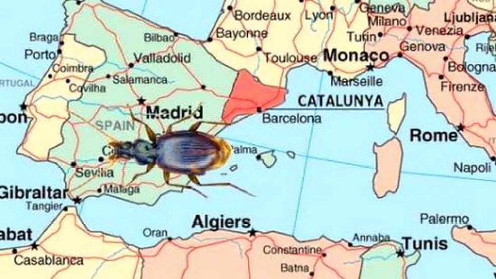 خنفساء تكشف ان الريف وكاتالونيا كانا ملتصقين قبل 30 مليون سنة
