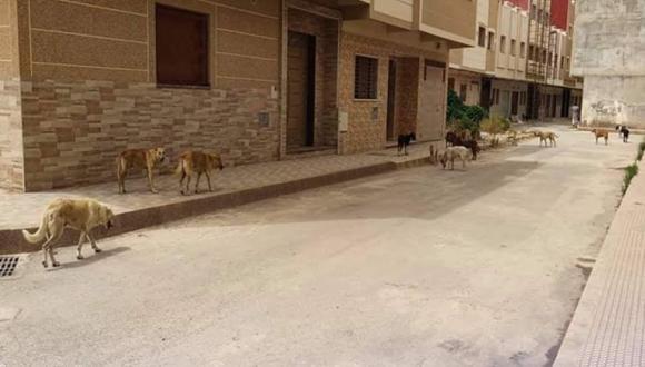 الكلاب الضالة تهدد حياة المواطنين الناظوريين