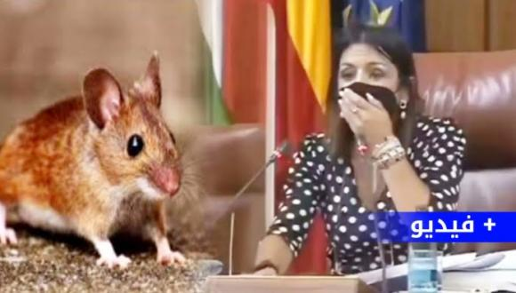 بالفيديو.. فأر يثير هلعا في البرلمان الإسباني