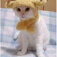 Kucing Lucu Berlambang 12 Zodiak