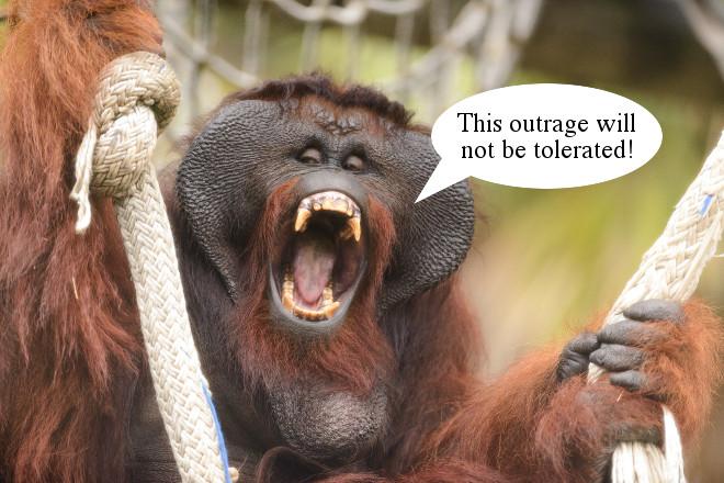 Monkeys sue over Windsors comparison