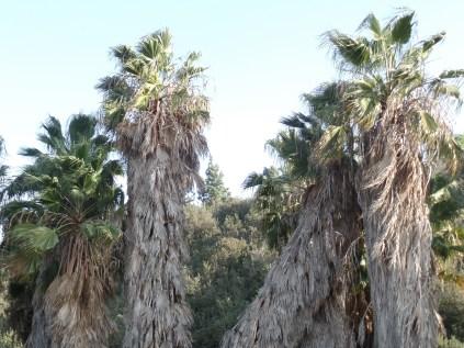 Palms, Rice Canyon, Chula Vista