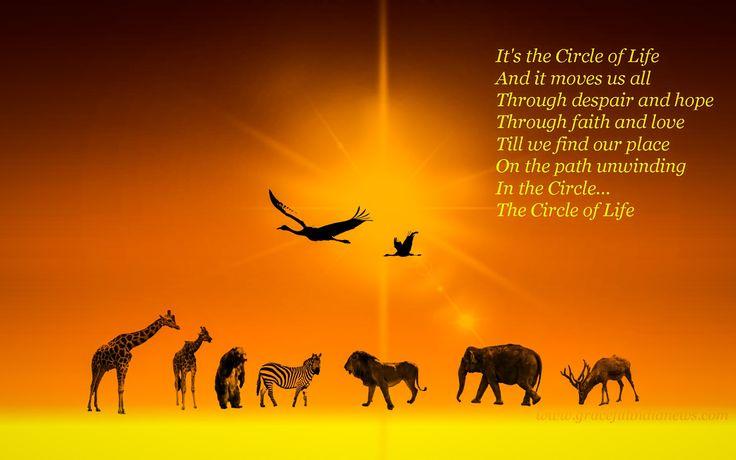 circle of life 1