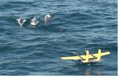 Flying_Fish_Drone_with_Dolphins-small_0
